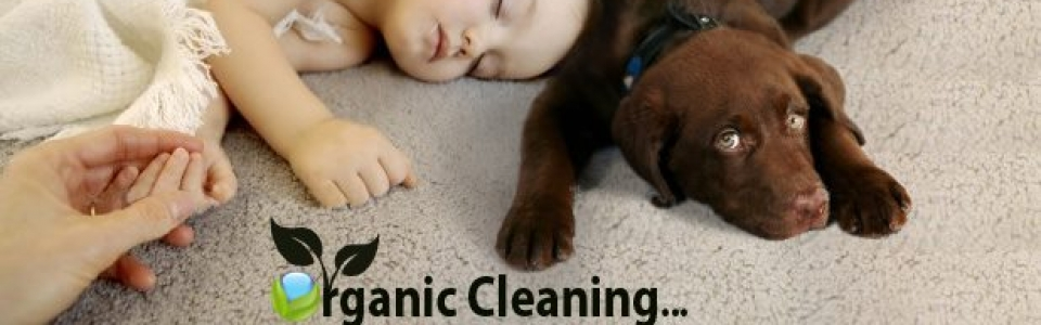Productos de limpieza biodegradables + desinfección a vapor